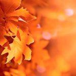 Empresas de Limpiezas Fuenlabrada Limpieza de otoño 4